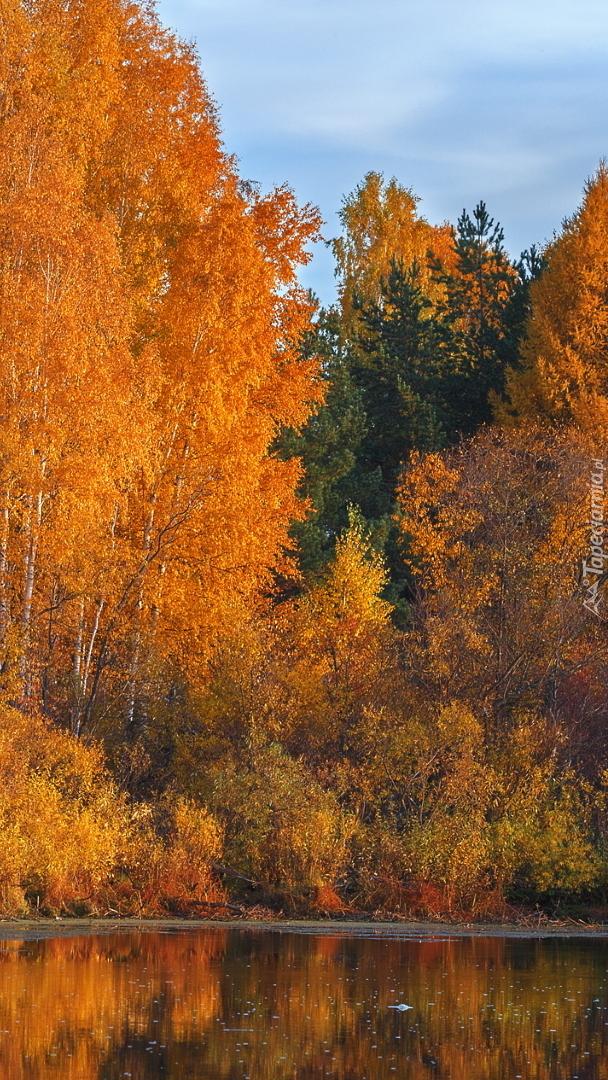 Złota jesień nad jeziorem