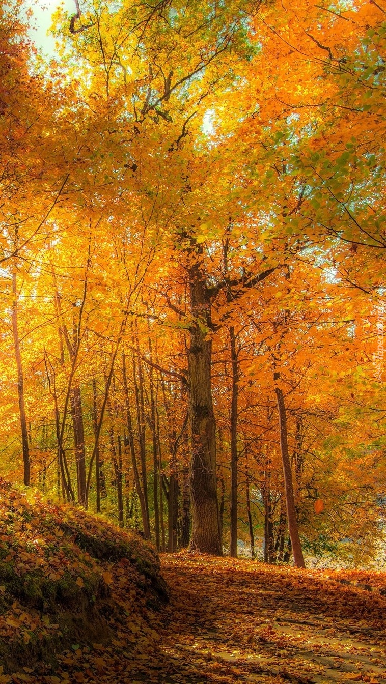 Złota jesień w lesie