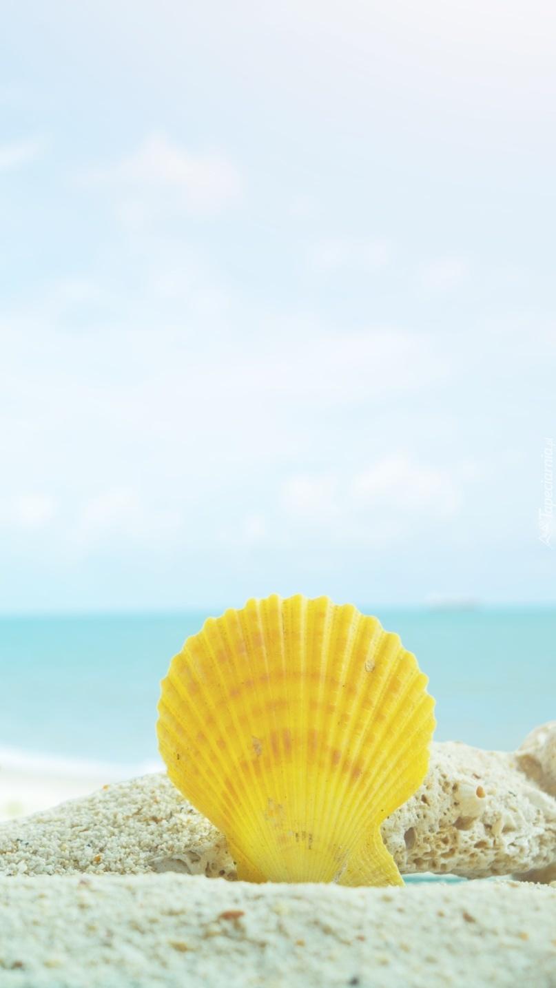 Żółta muszelka w piasku