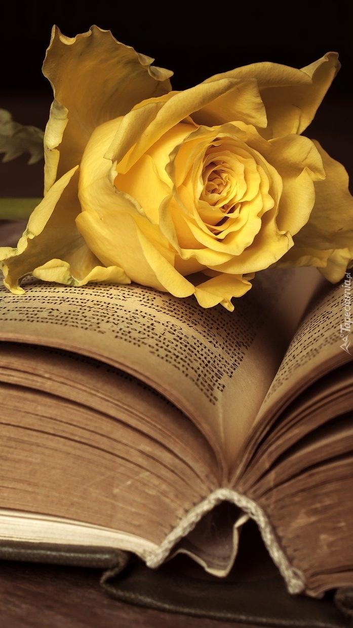 Żółta róża na otwartej książce