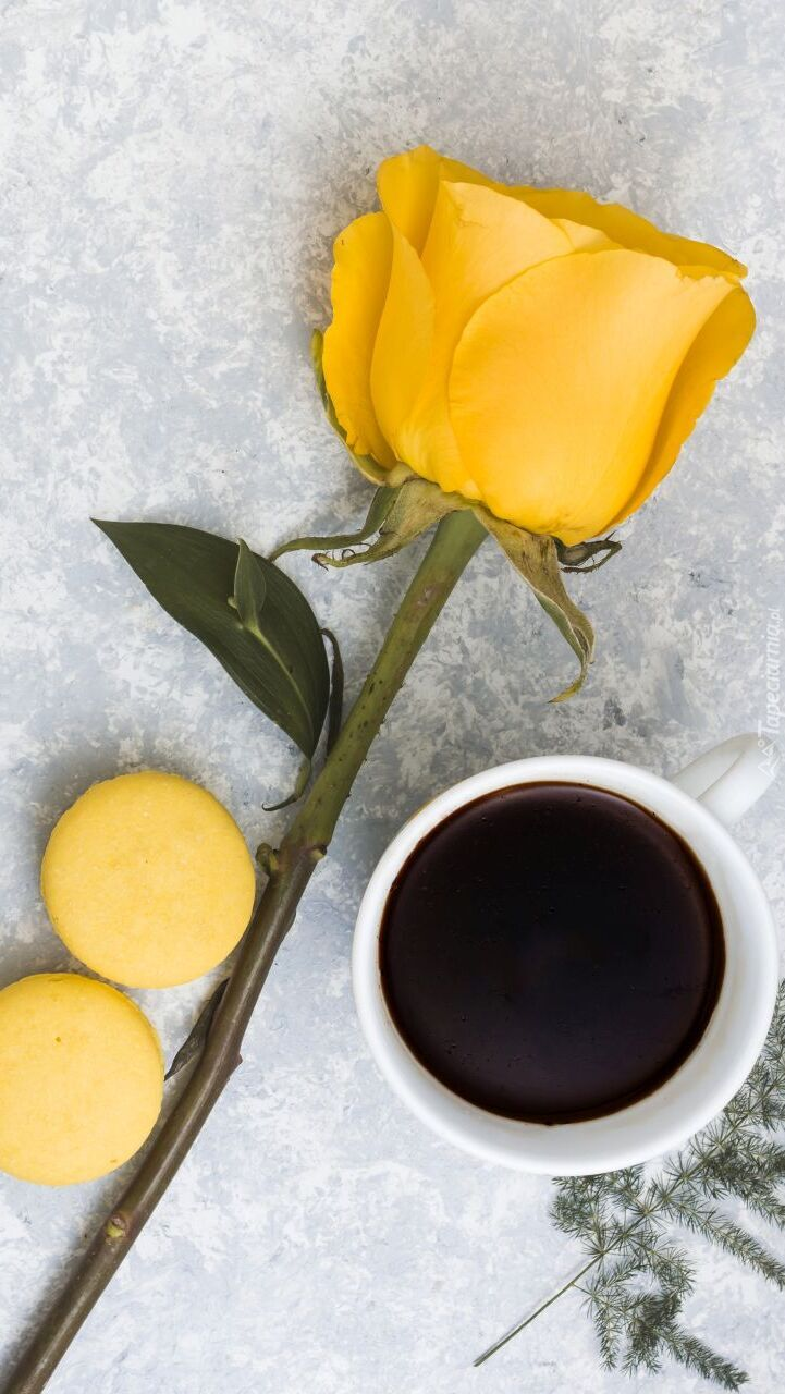 Żółta róża obok kawy