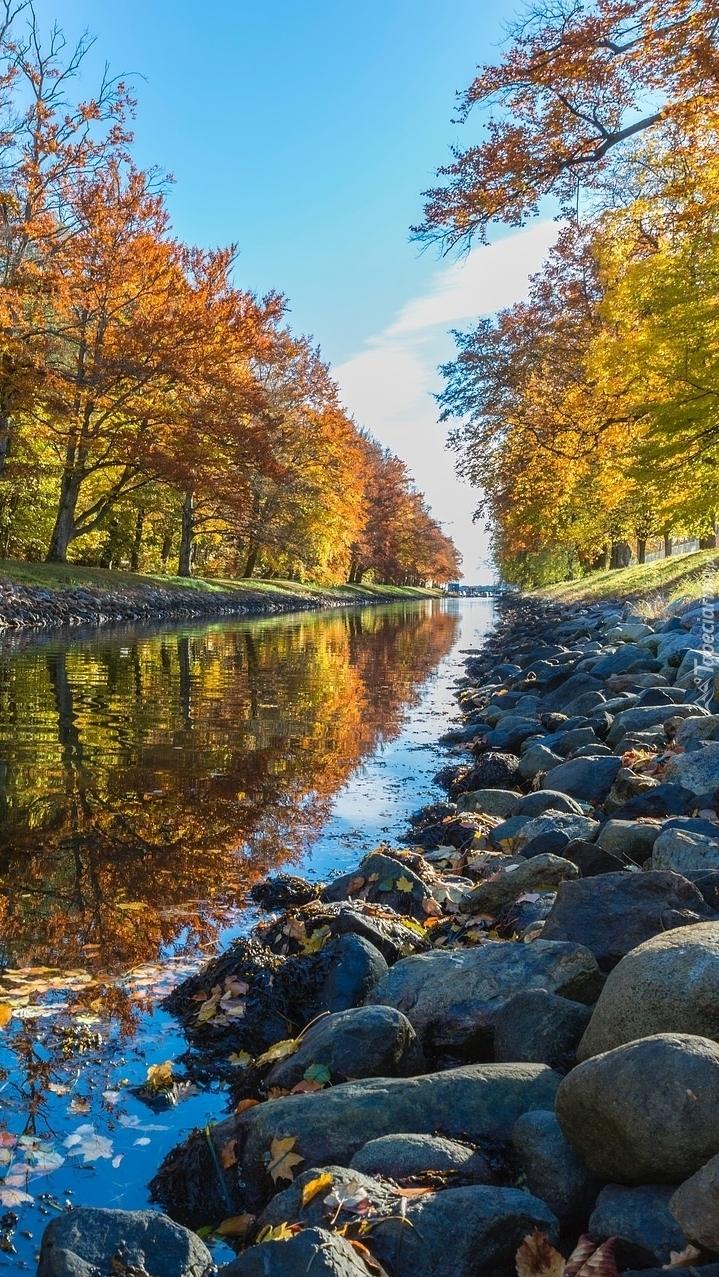 Żółte drzewa i kamienie na brzegu rzeki