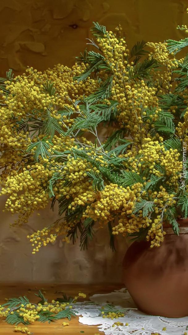 Żółte gałązki akacji w wazonie