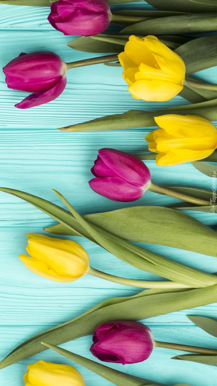 Żółte i różowe tulipany