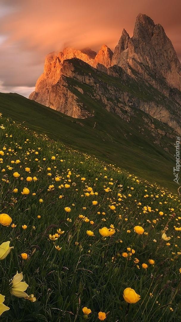 Żółte kwiaty na górskiej łące