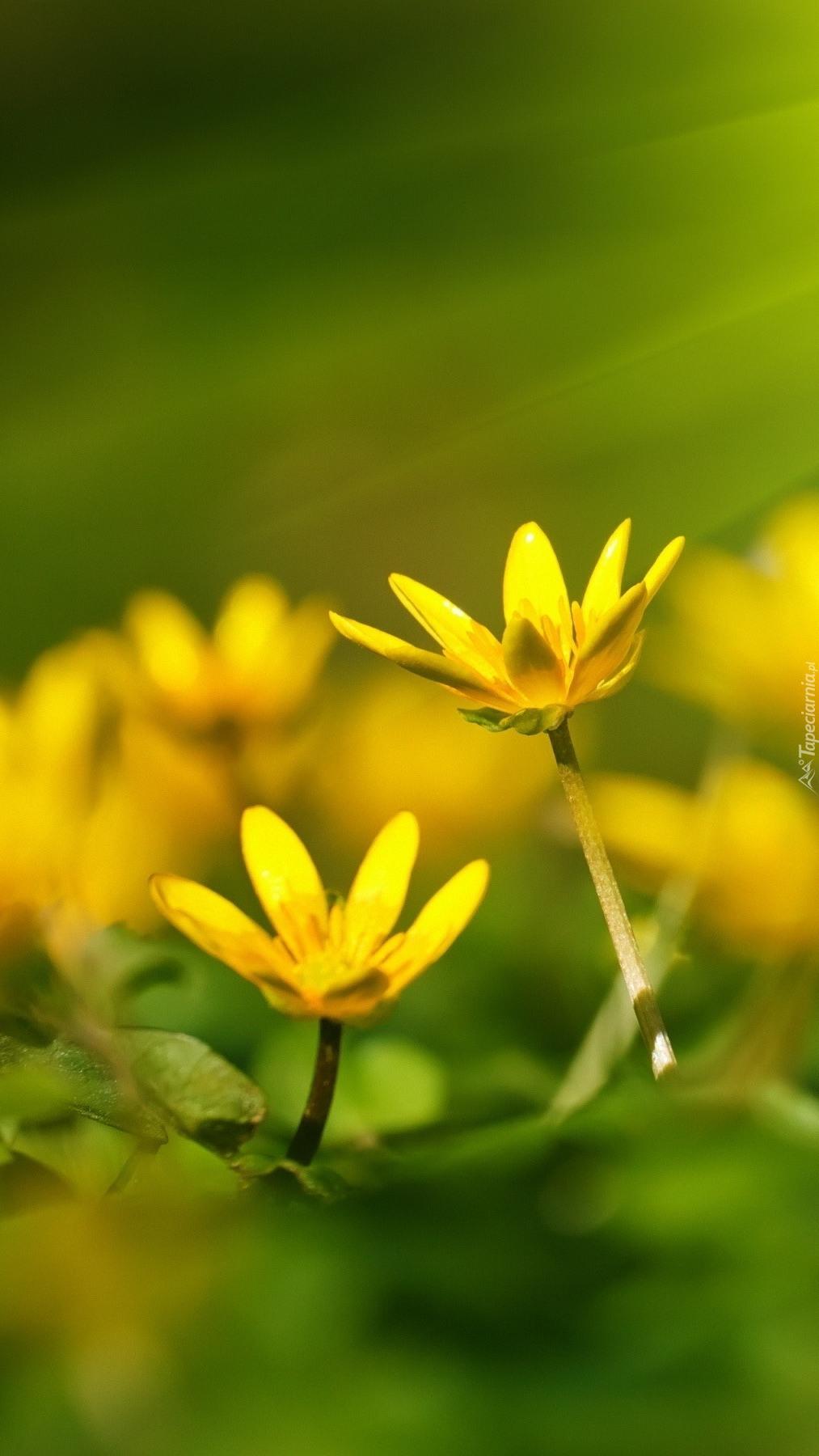 Żółte kwiaty na rozmytym tle