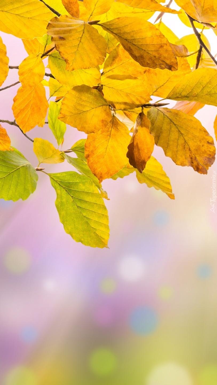 Żółte liście