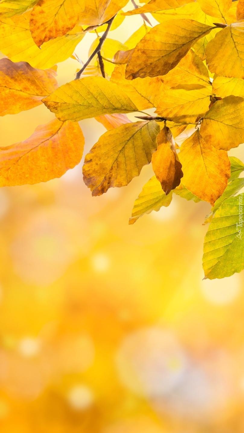 Żółte liście na gałązkach