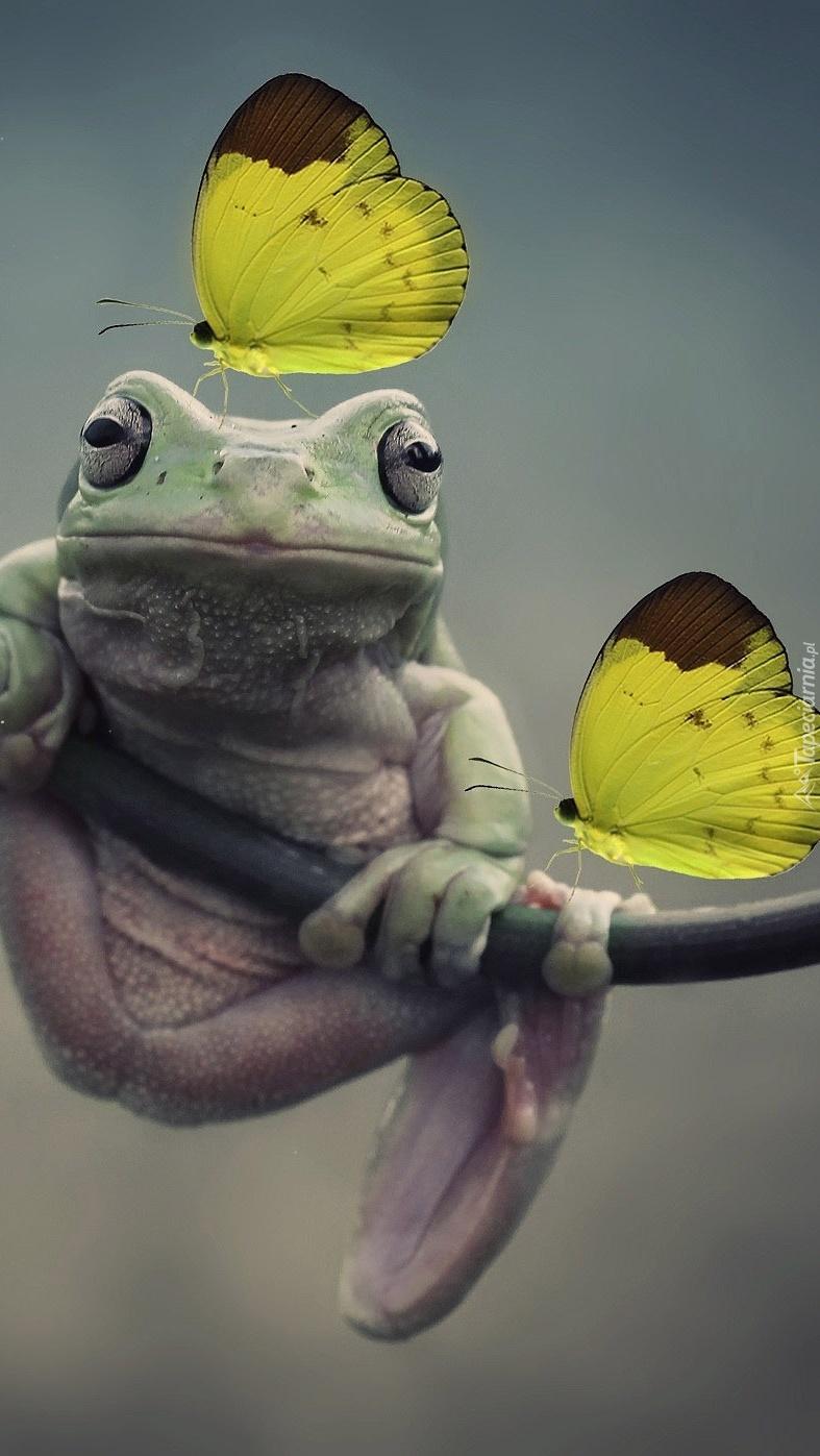 Żółte motyle na żabce
