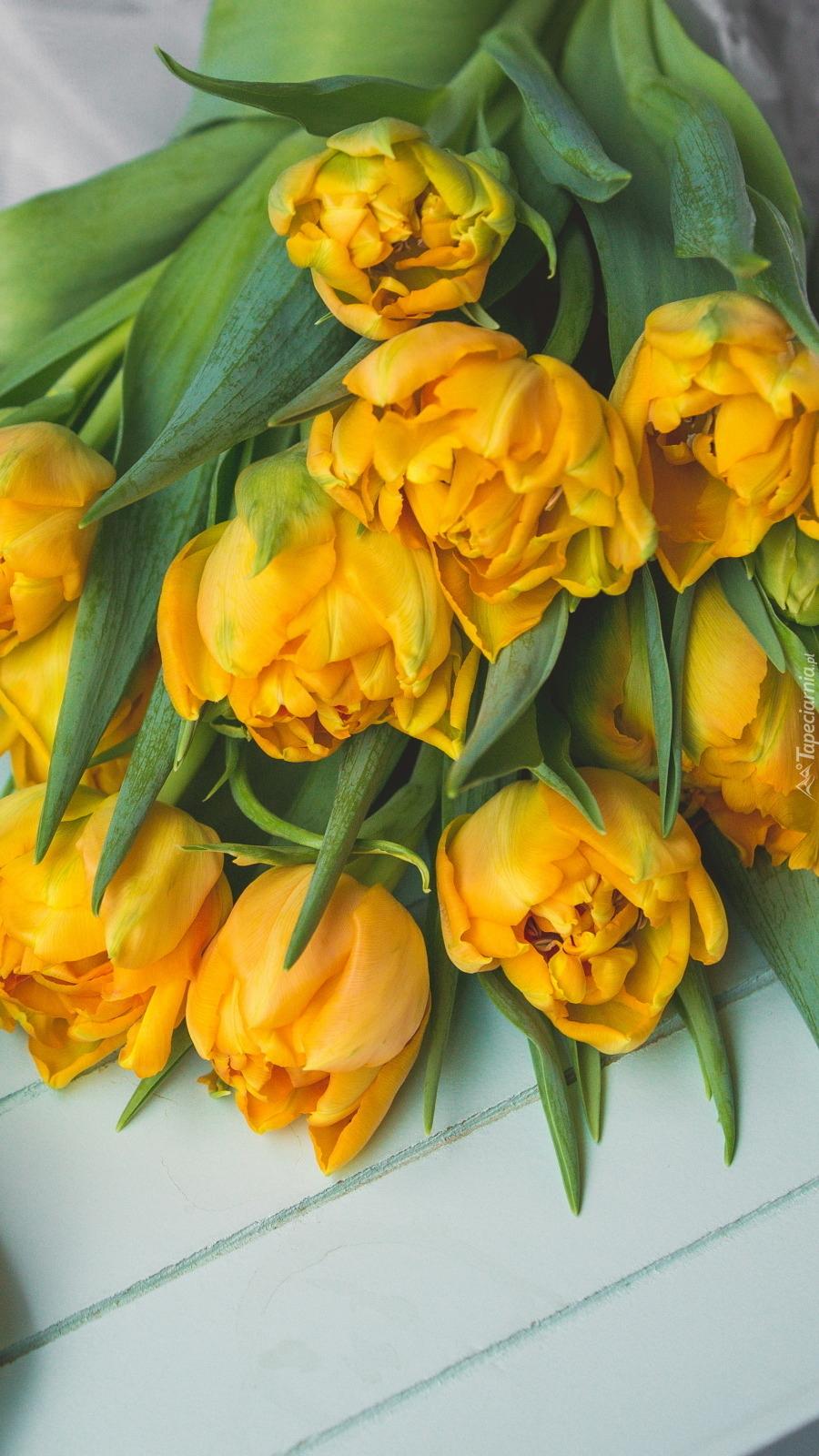 Żółte tulipany na desce