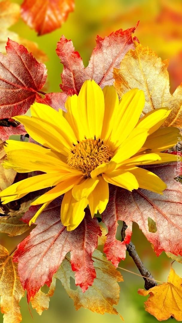 Żółty kwiat na jesiennych liściach