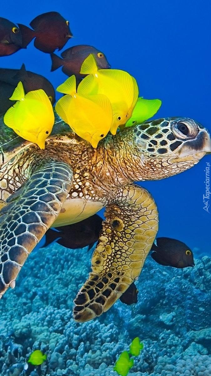 Żółw i ryby