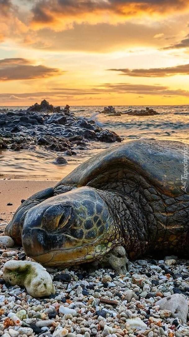 Żółw w zbliżeniu