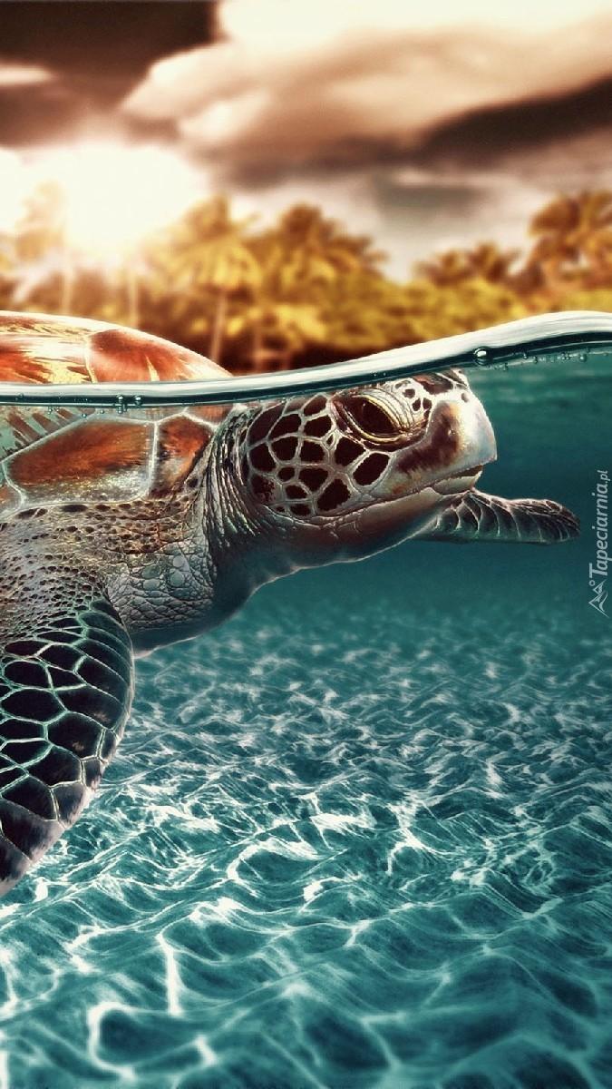 Żółw wodny pływający w oceanie