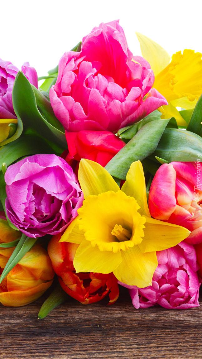 Żonkile i tulipany