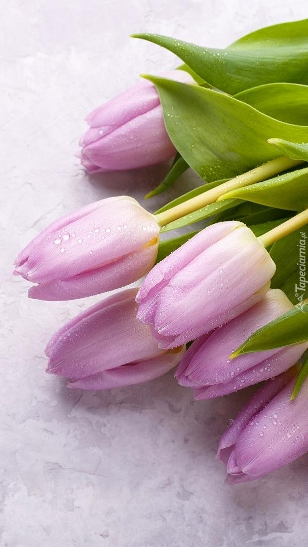 Zroszone tulipany