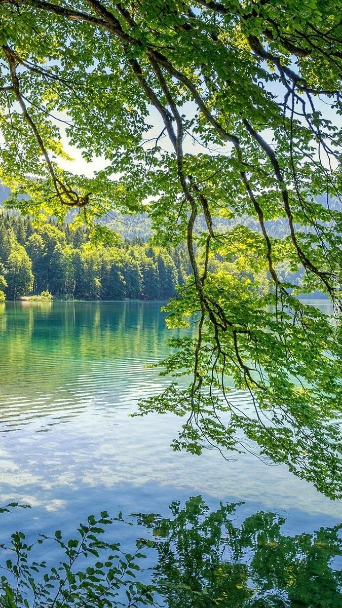 Zwisające gałęzie nad jeziorem