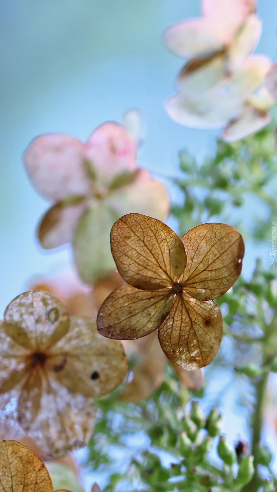 Żywot kwiatów