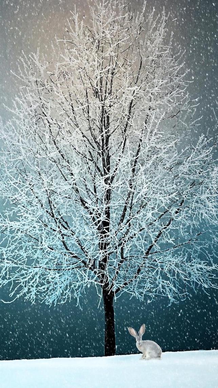 Zziębnięty zajączek pod oszronionym drzewem