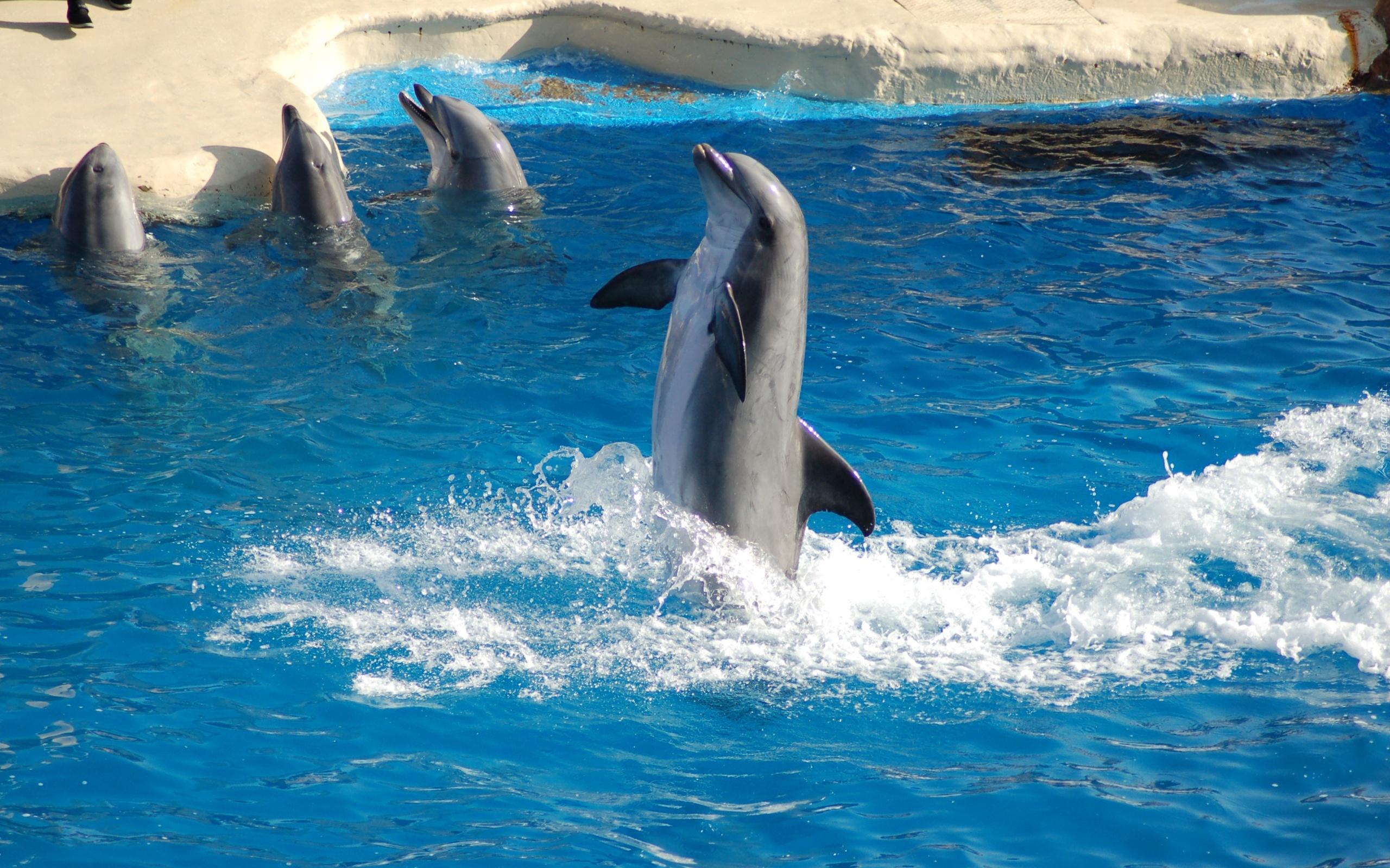 Обои Дельфины Скачать Бесплатно