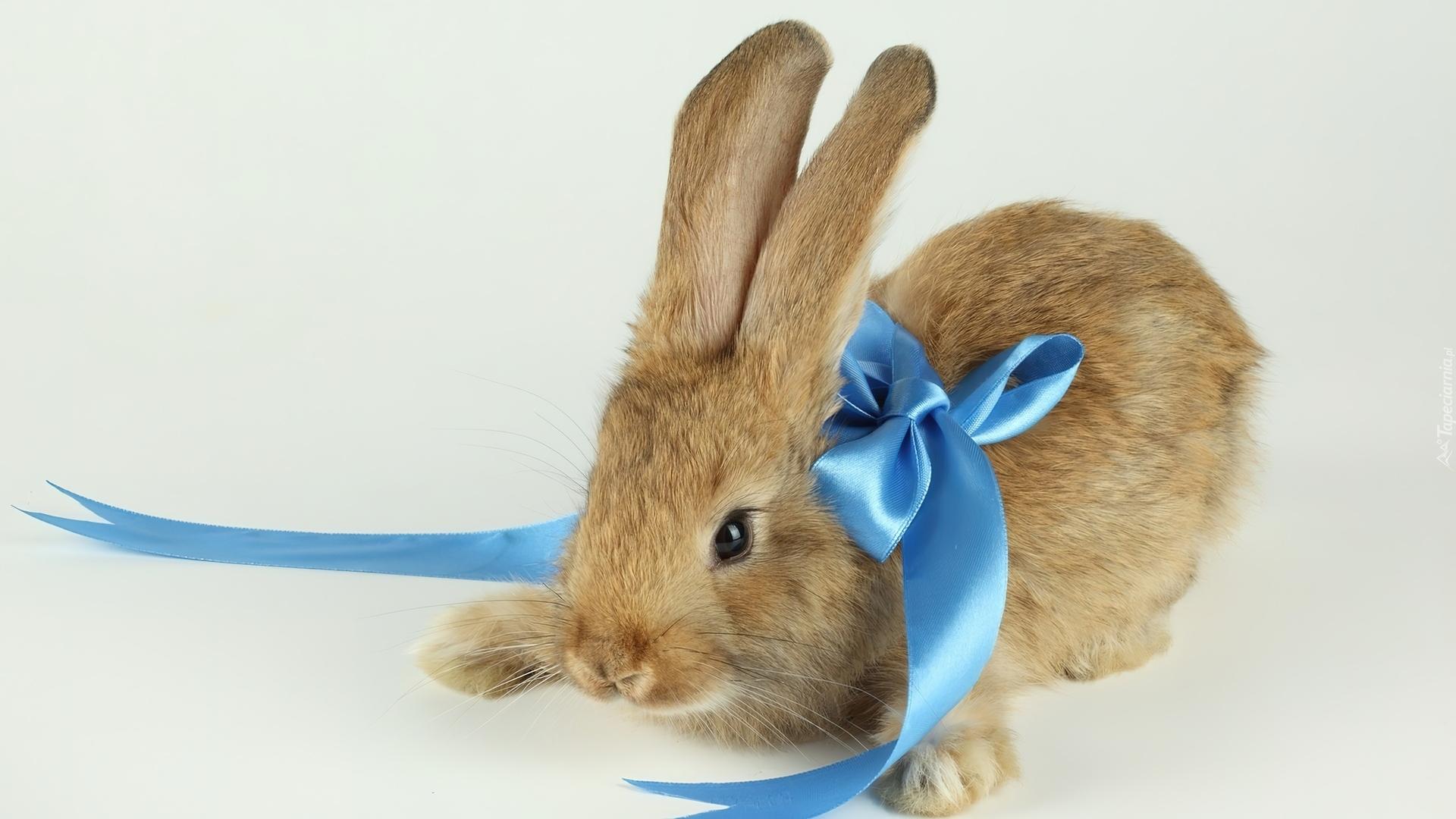Декоративный кролик без смс