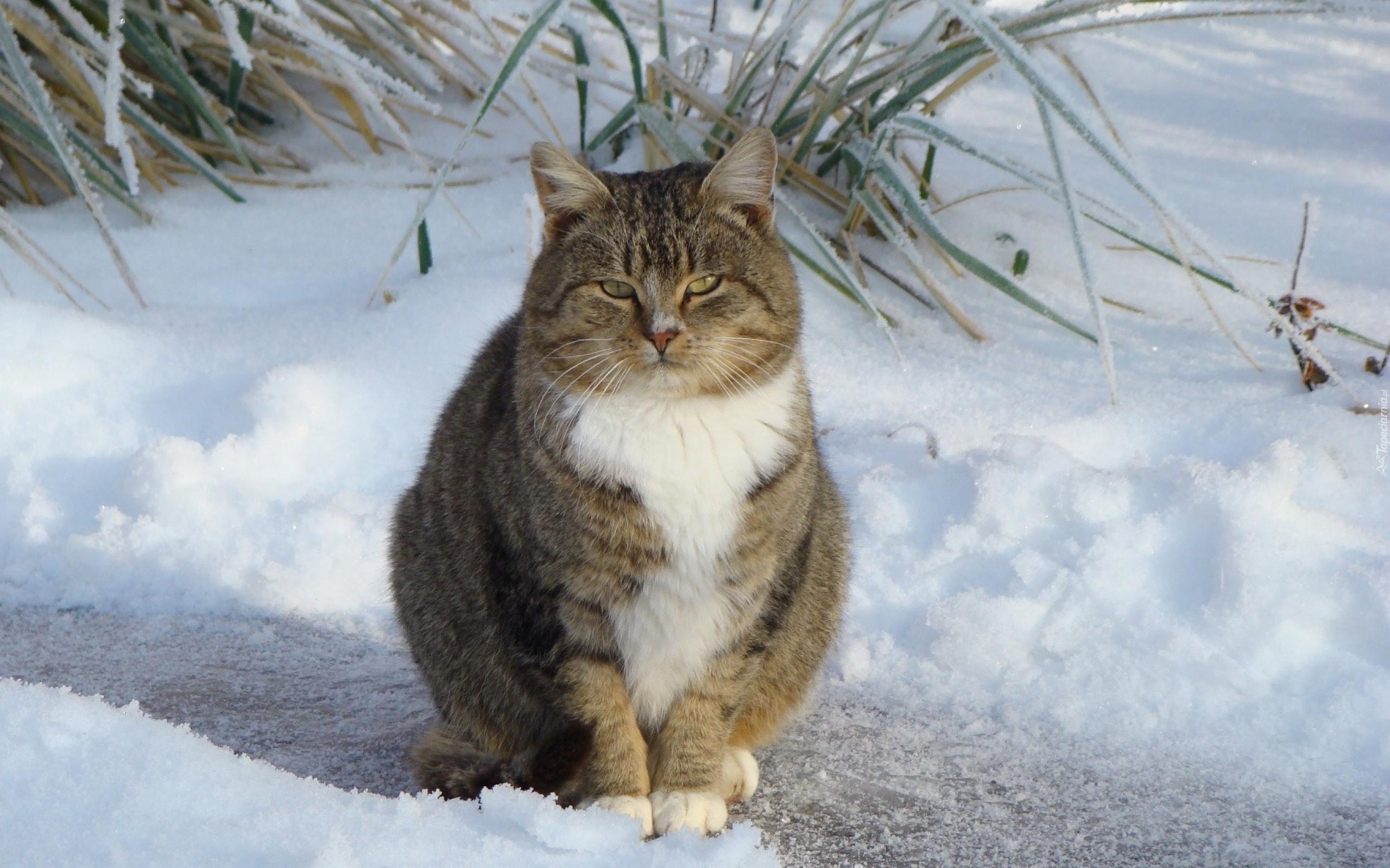 сведения, картинки коты в снегу на рабочий стол турникеты
