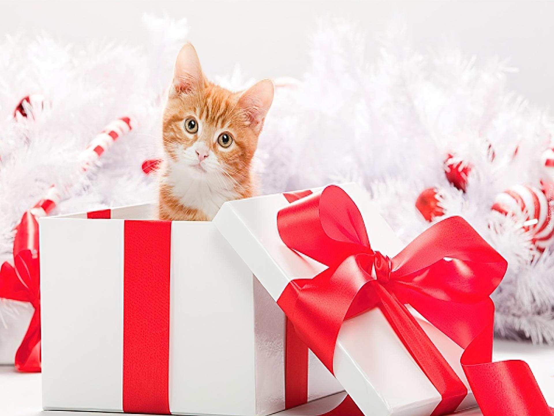 Юбилей зятю, кот с подарком открытка