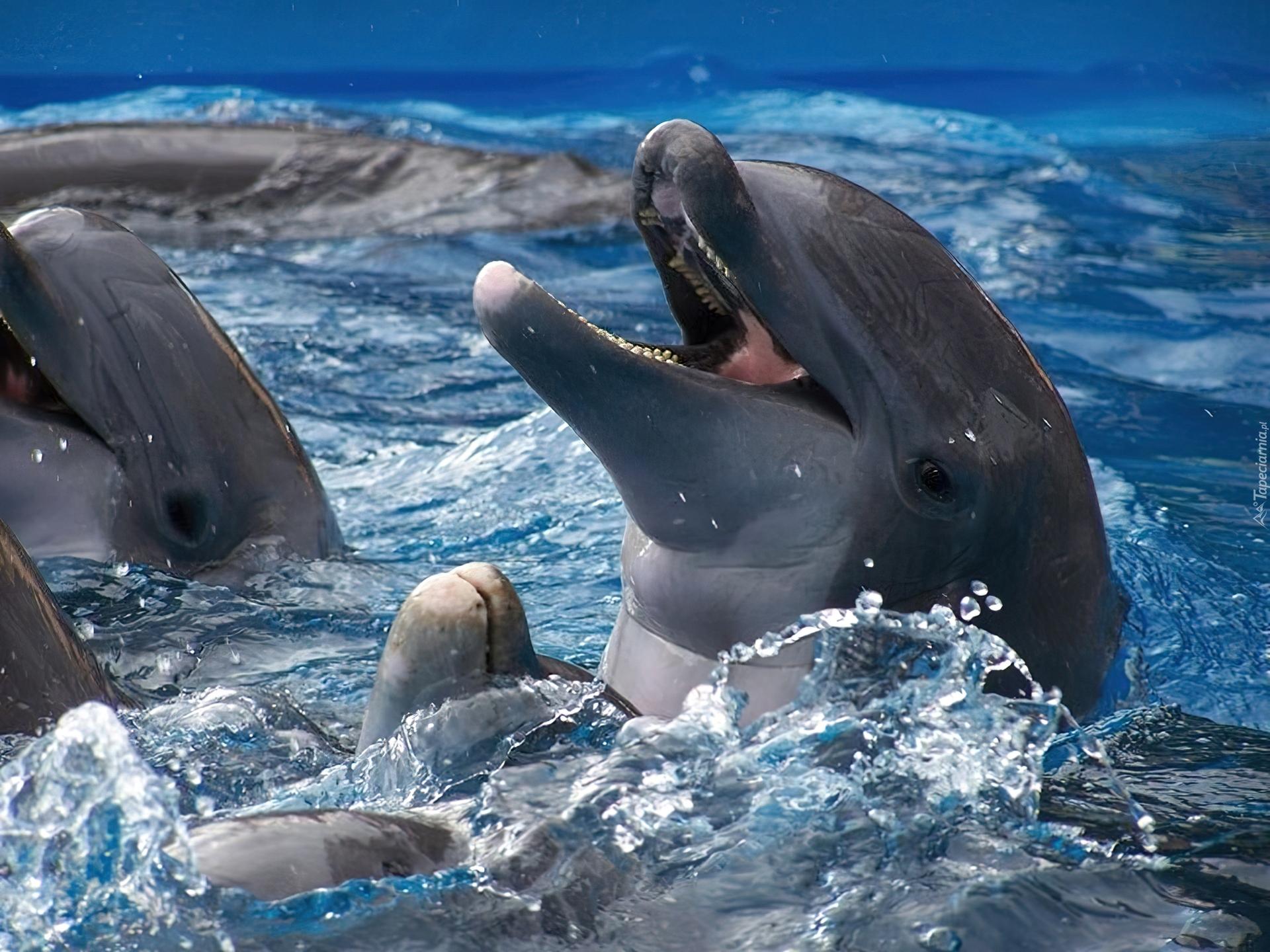 Дельфины картинки прикольные