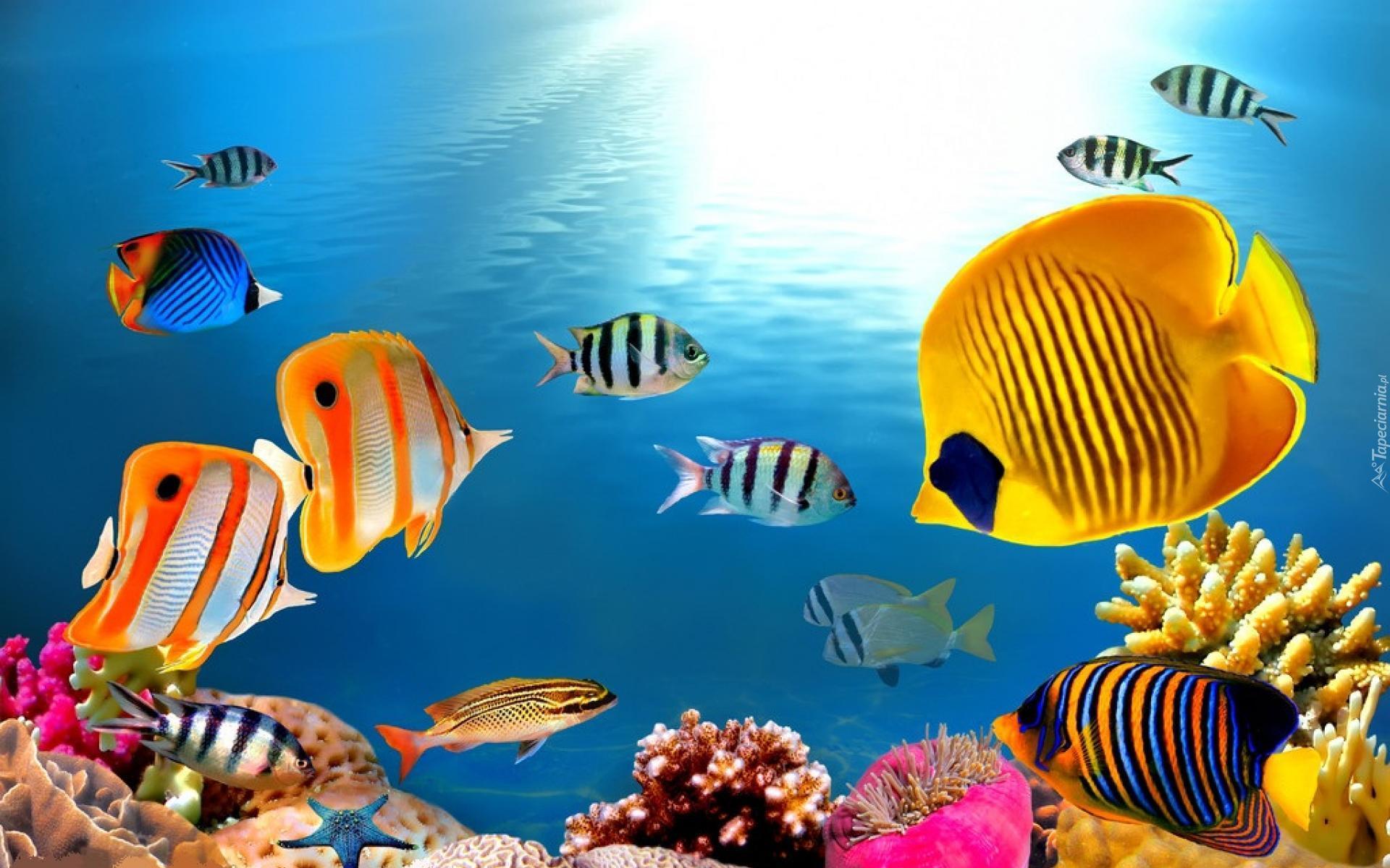 Podwodny Swiat Rybki Ocean