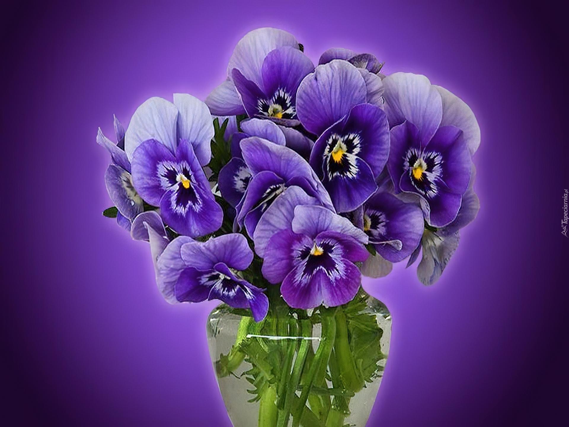Заповедник, цветы для анечки открытка
