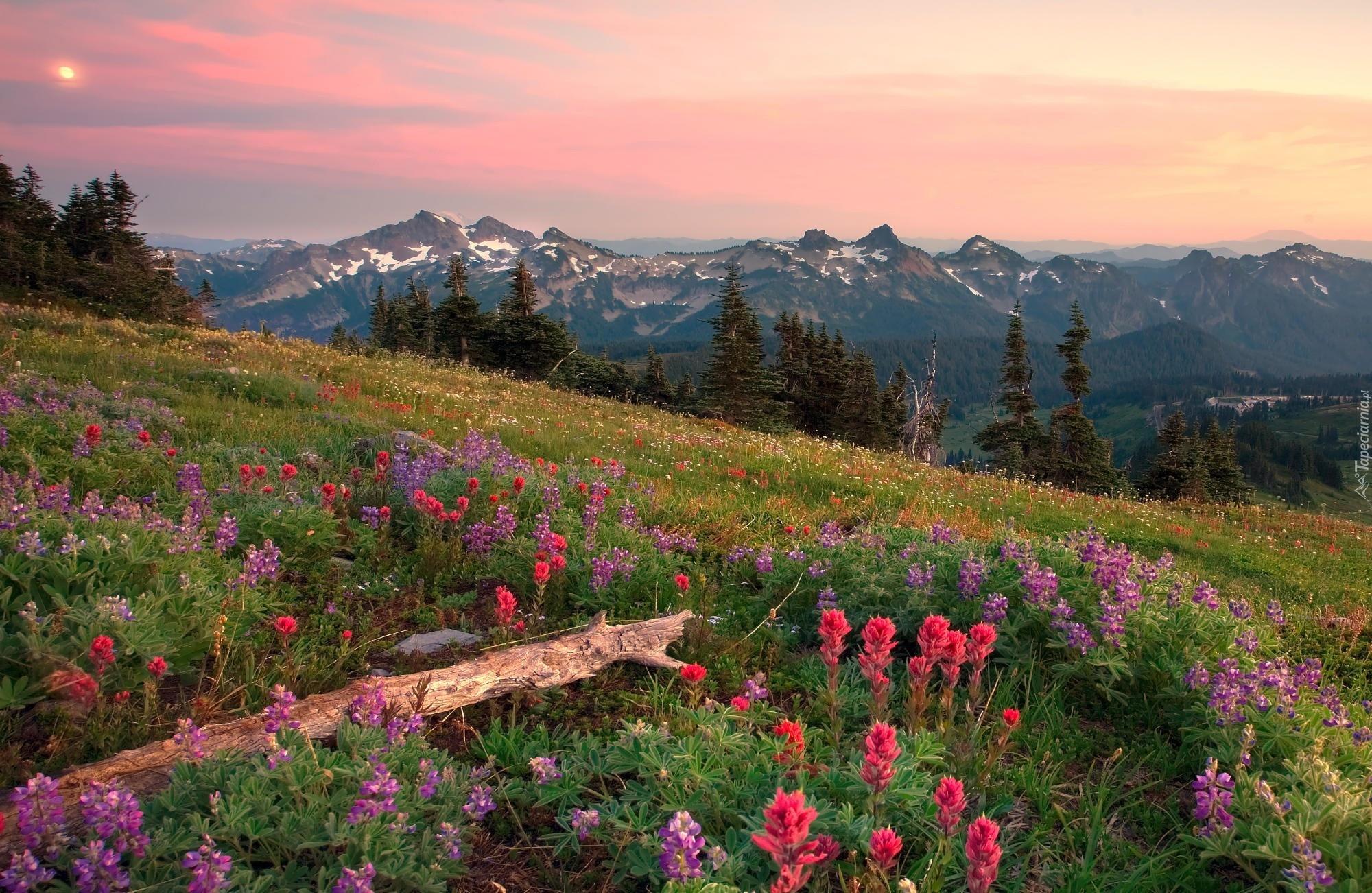 цветочная поляна ели горы бесплатно