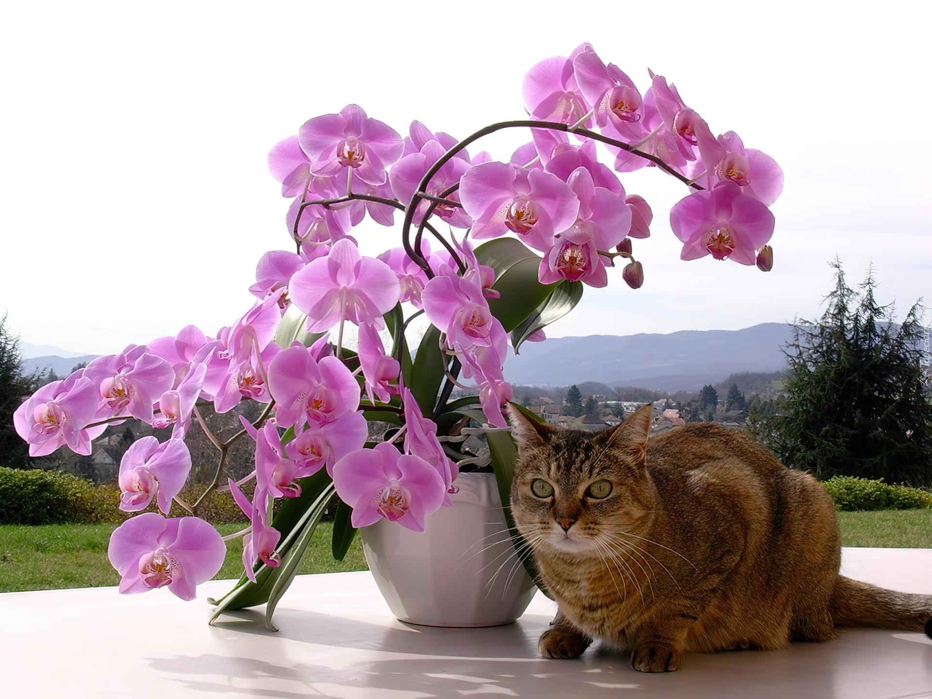 Доброе утро картинки с орхидеями, картинки