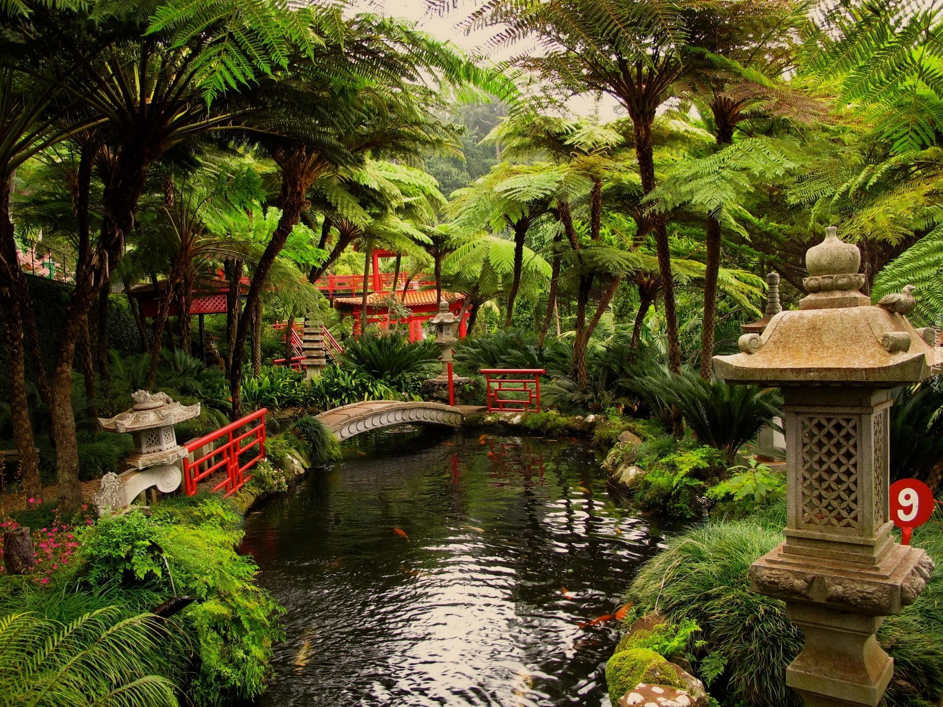 Ogród Mostek Rośliny Oczko Wodne