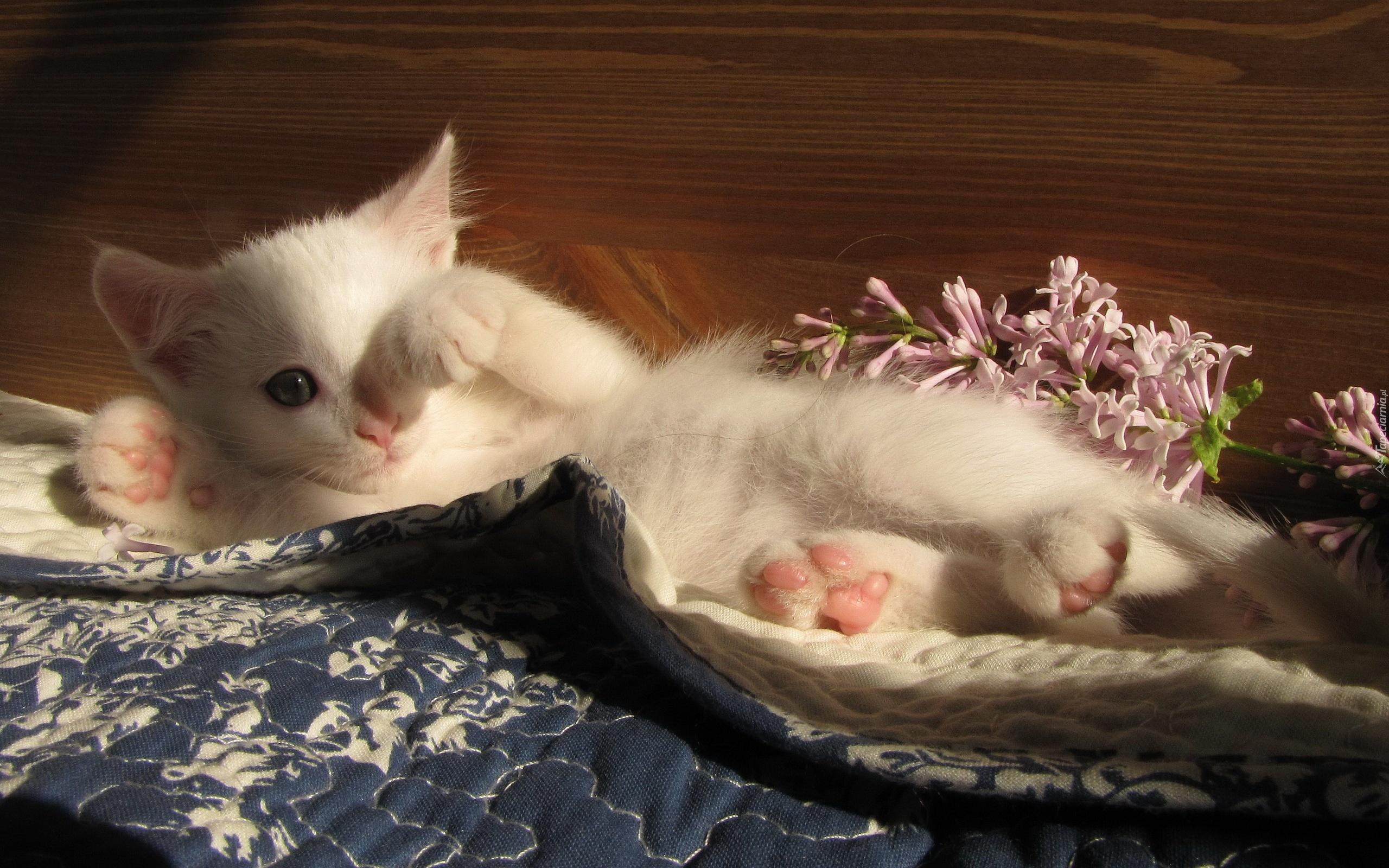 фото проснувшегося котенка район включает