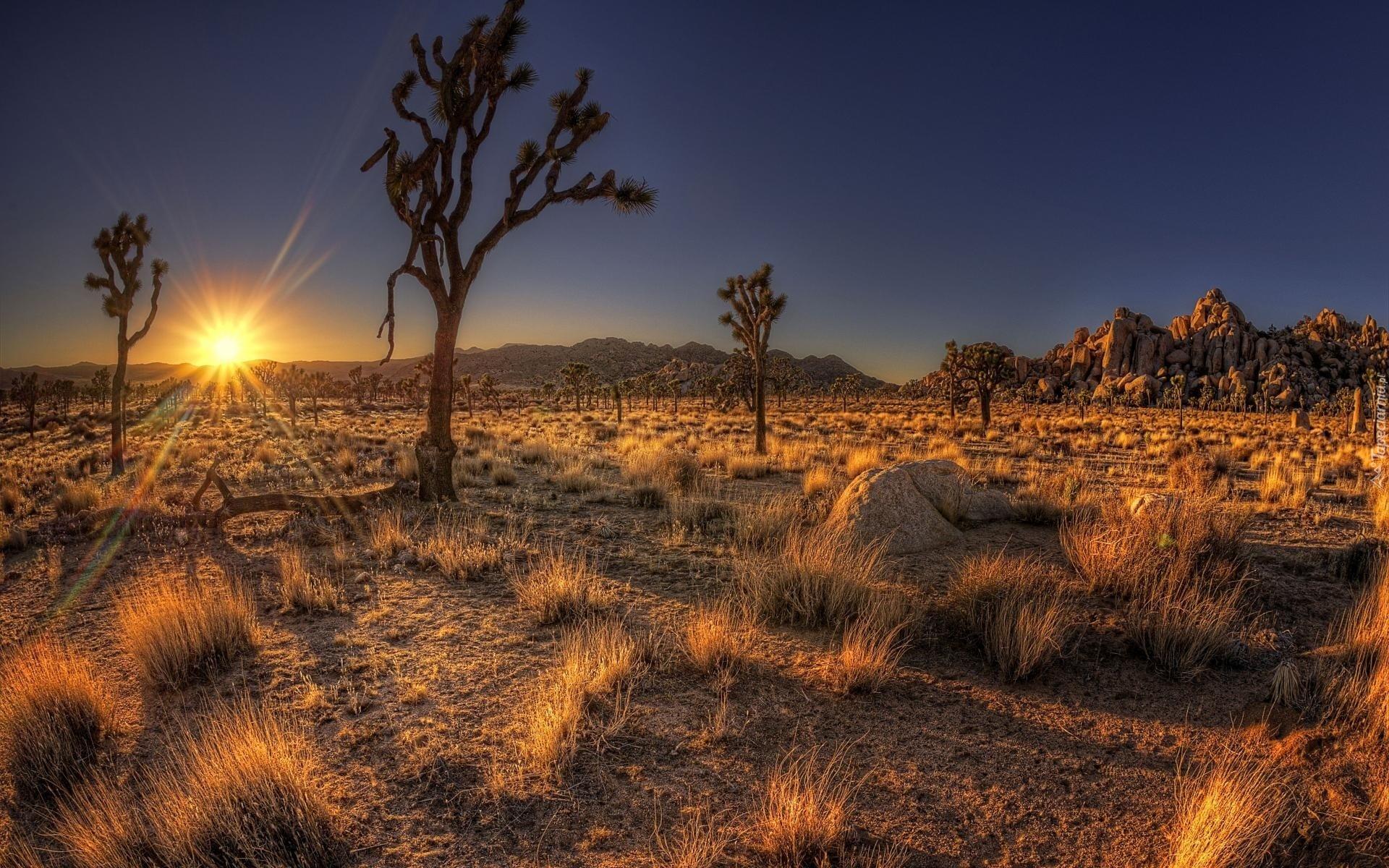 Аризона2 без смс