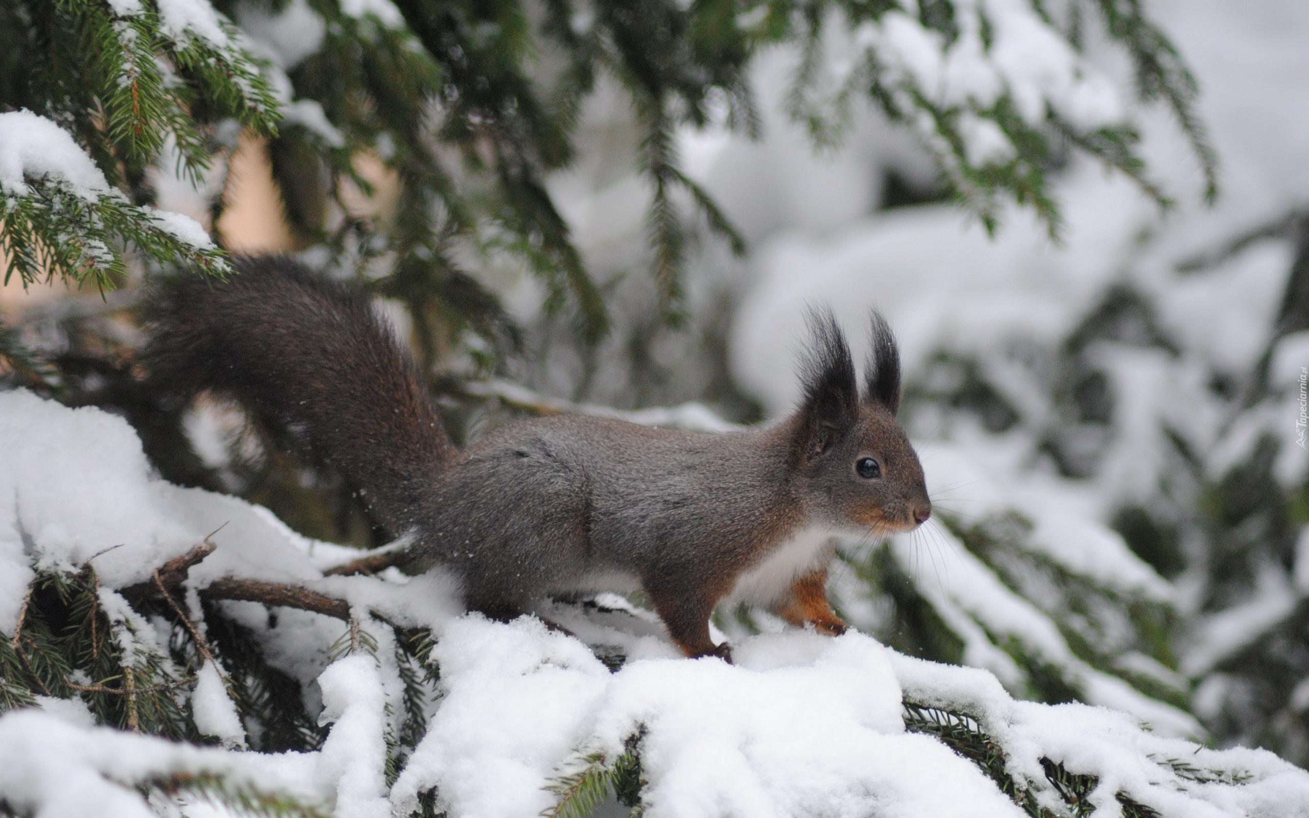 стал картинки белочки и зимний лес подрастающем поколении, власти