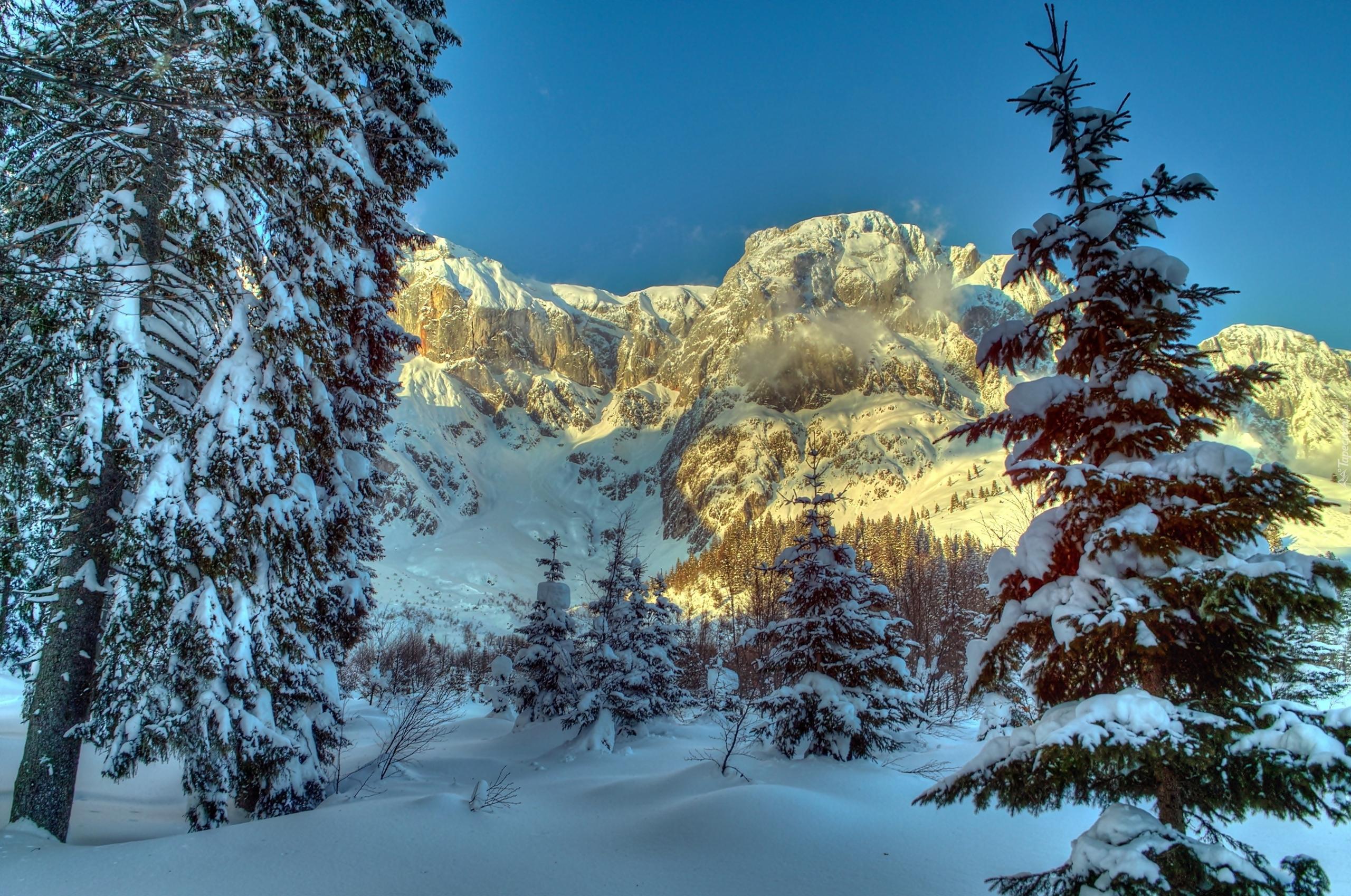 Снег горы зима ели загрузить