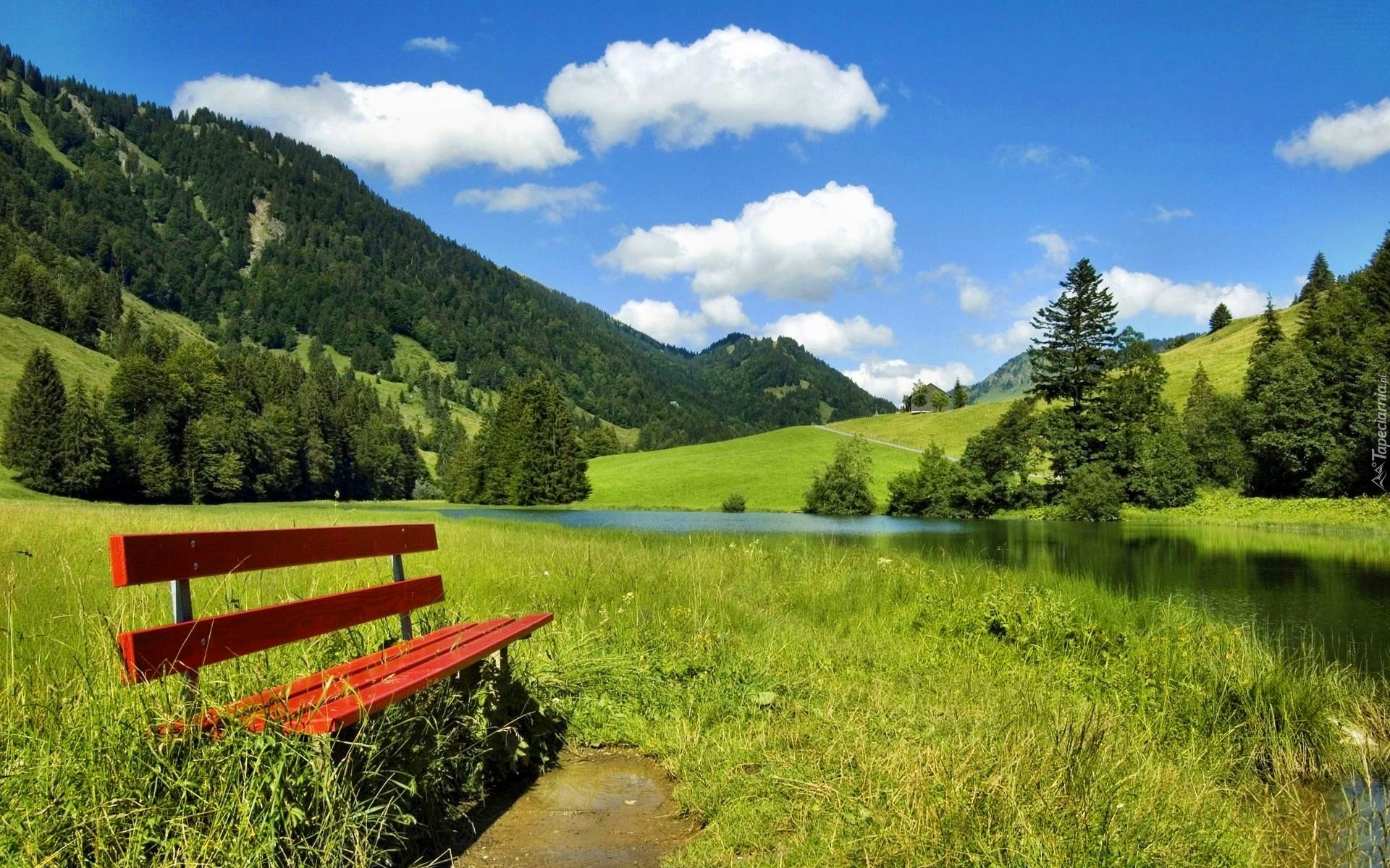 ели, трава, горы, скамейка загрузить