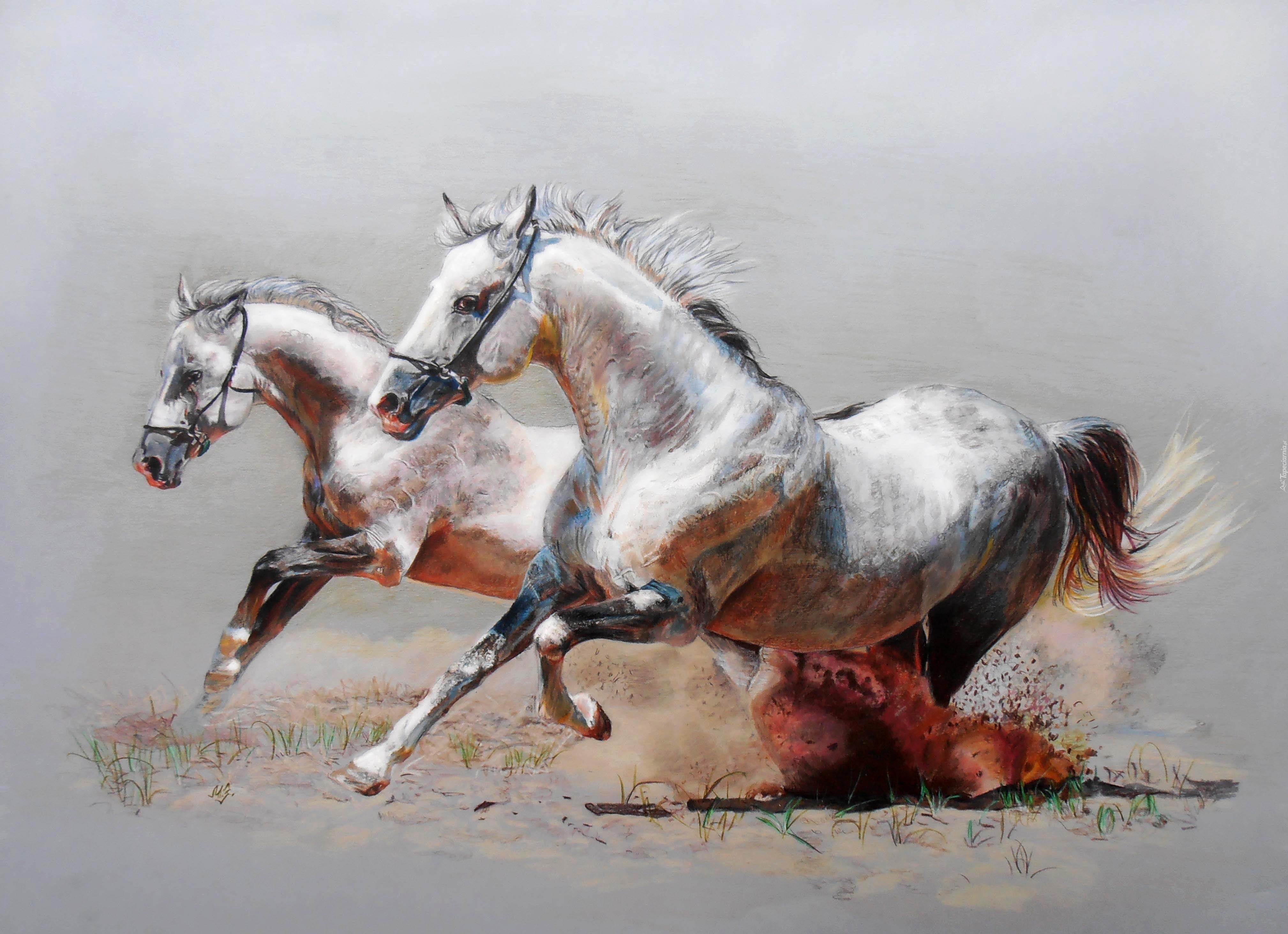 Obraz Konie Galop