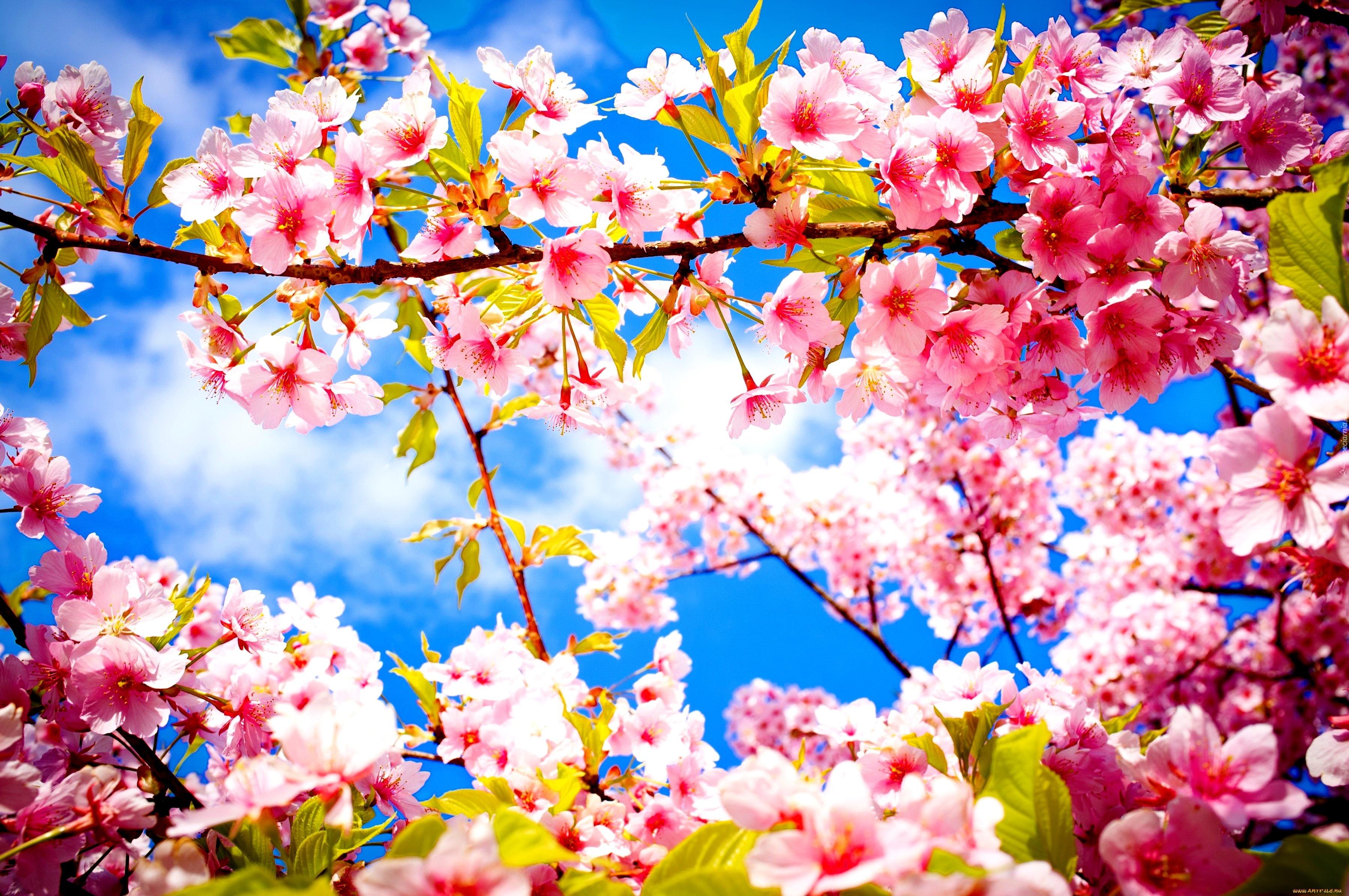 Бесплатно Скачать Картинки Обои Цветы