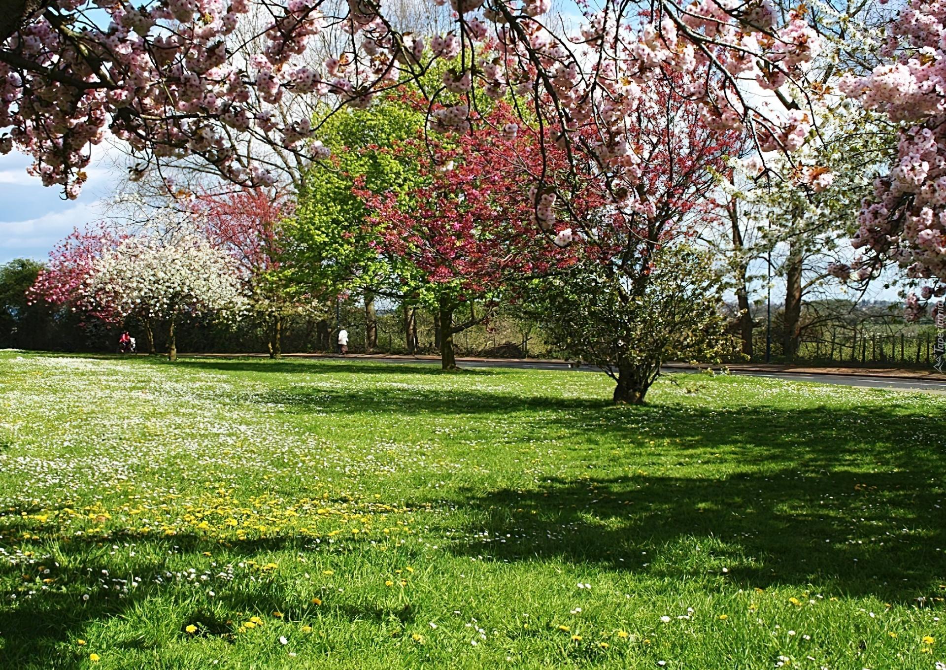 Wiosna Kwitnące Drzewa Łąka