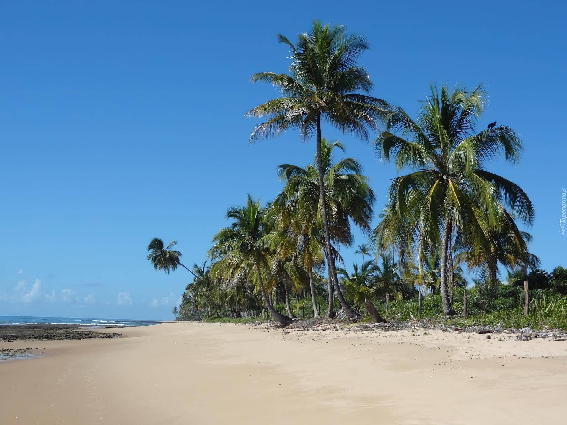 Pla U017ca Palmy Brazylia
