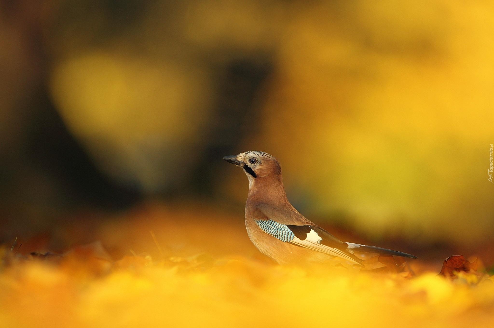 Желтая птичка скачать
