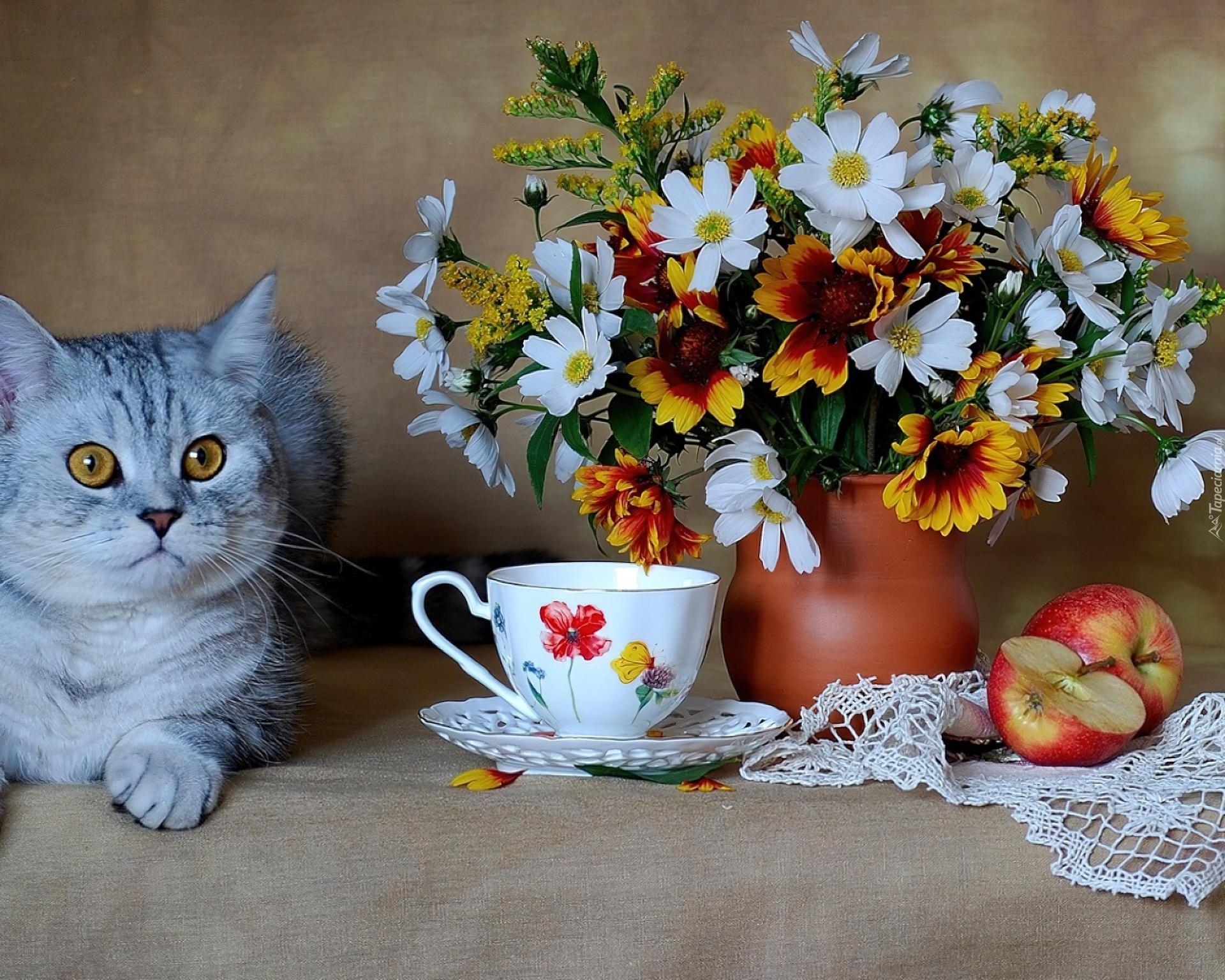 Картинки с кошечками доброго утра