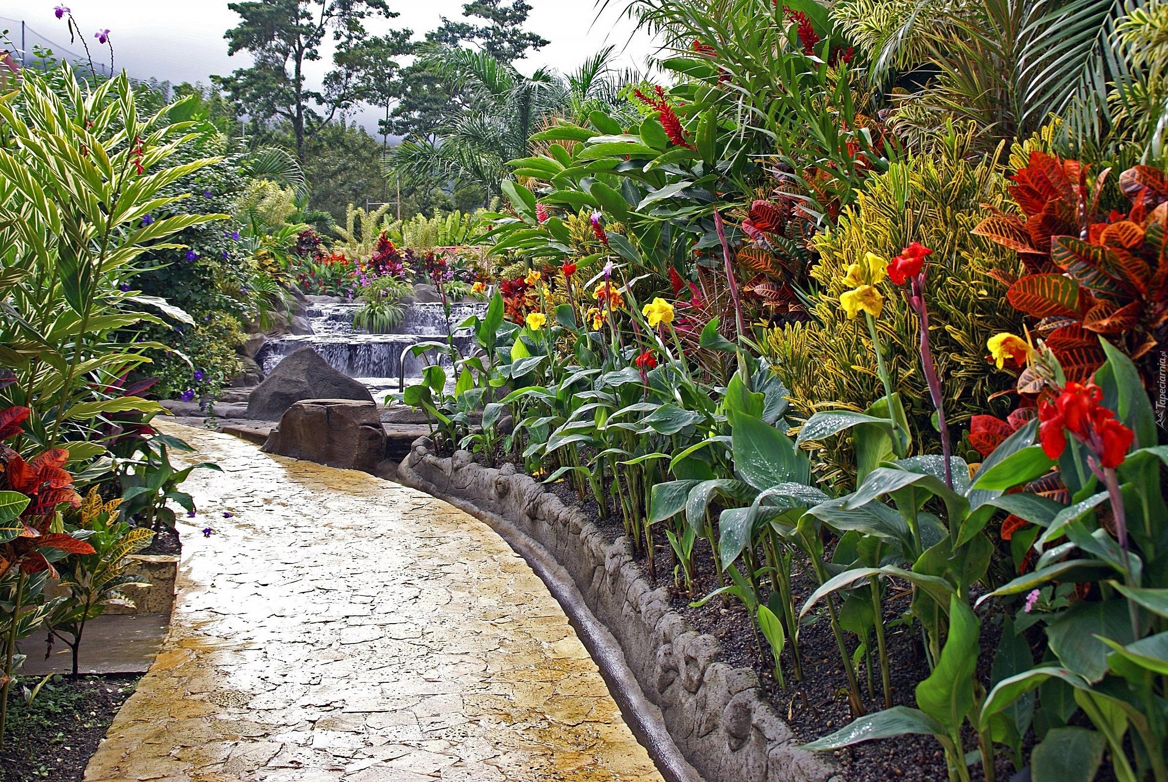 еще тропический сад гавайи фото исполнилось