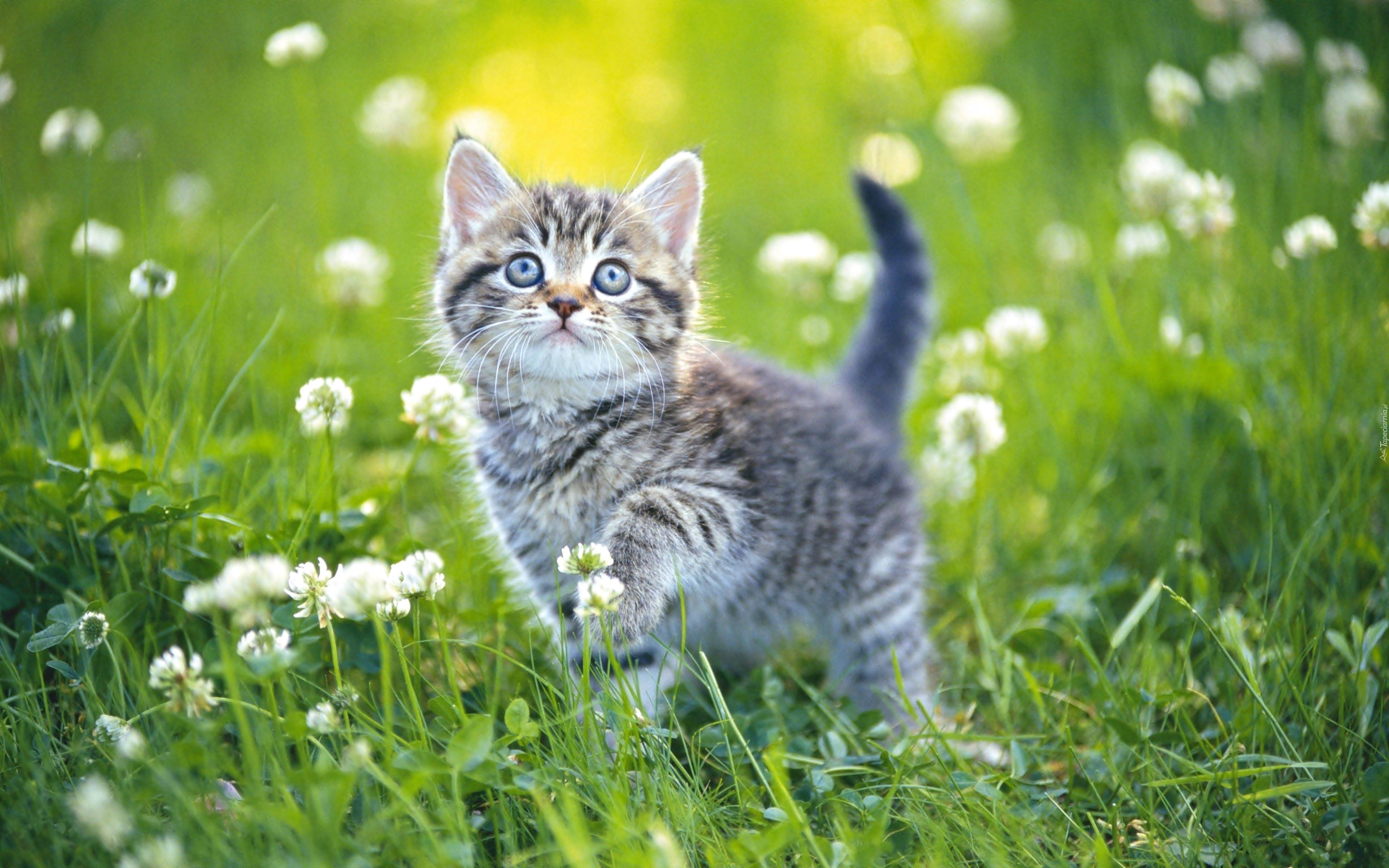 котенок прыжок трава цветы без смс