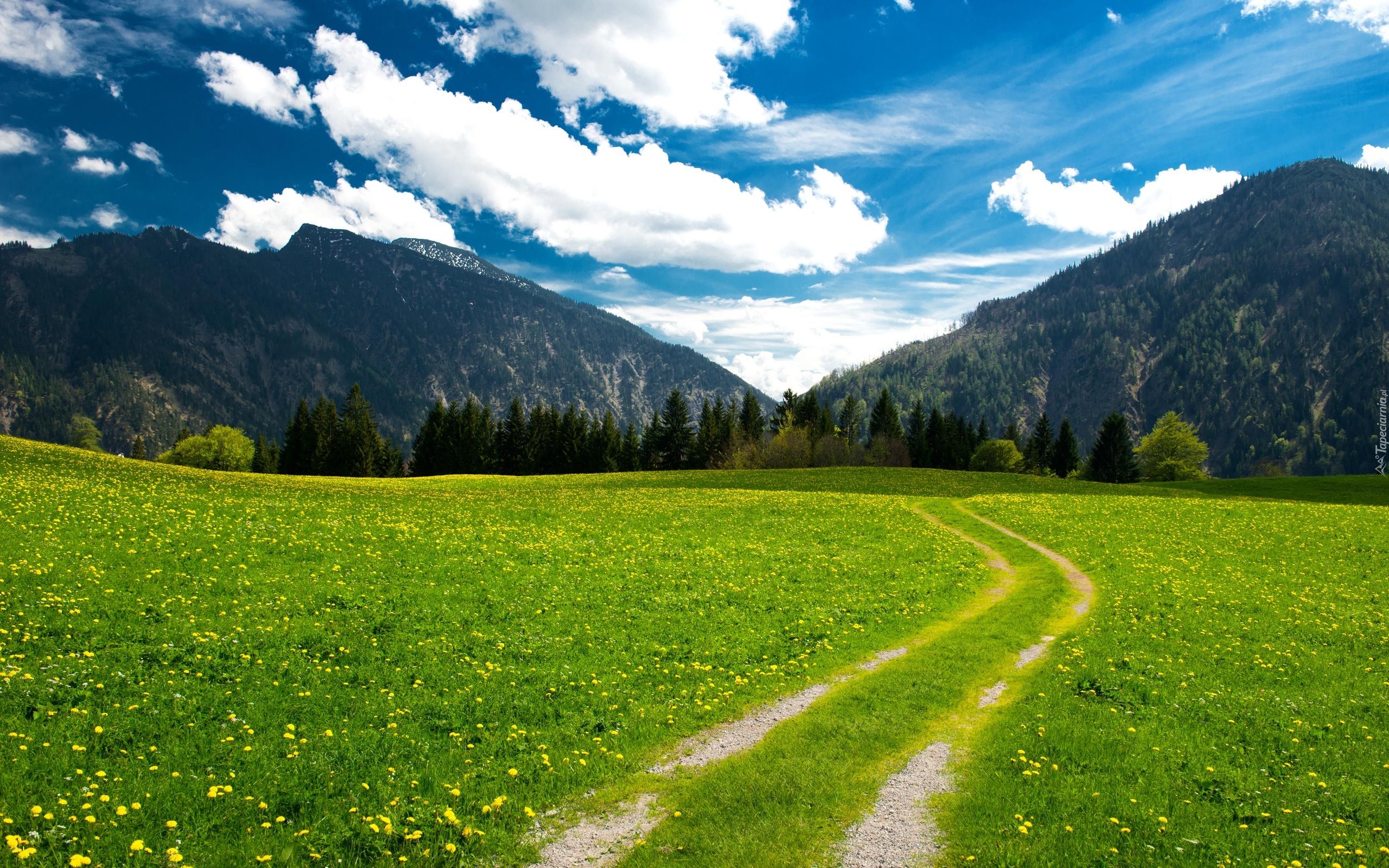Alpy, Bawarskie, Droga, Łąki, Kwiaty, Lasy
