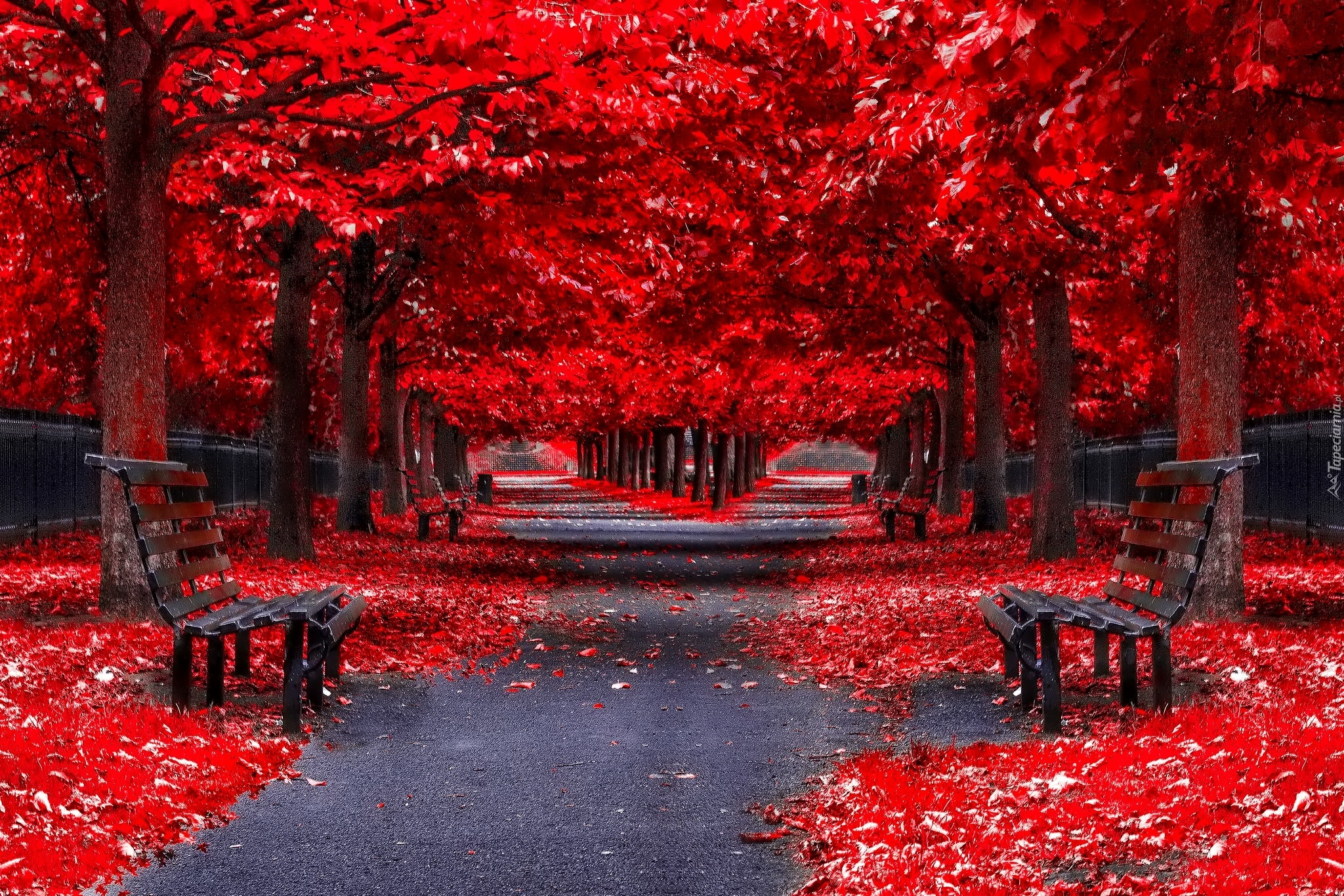 Labels Red Autumn Leaves Photography Hd Wallpapers For: Park, Alejki, Ławki