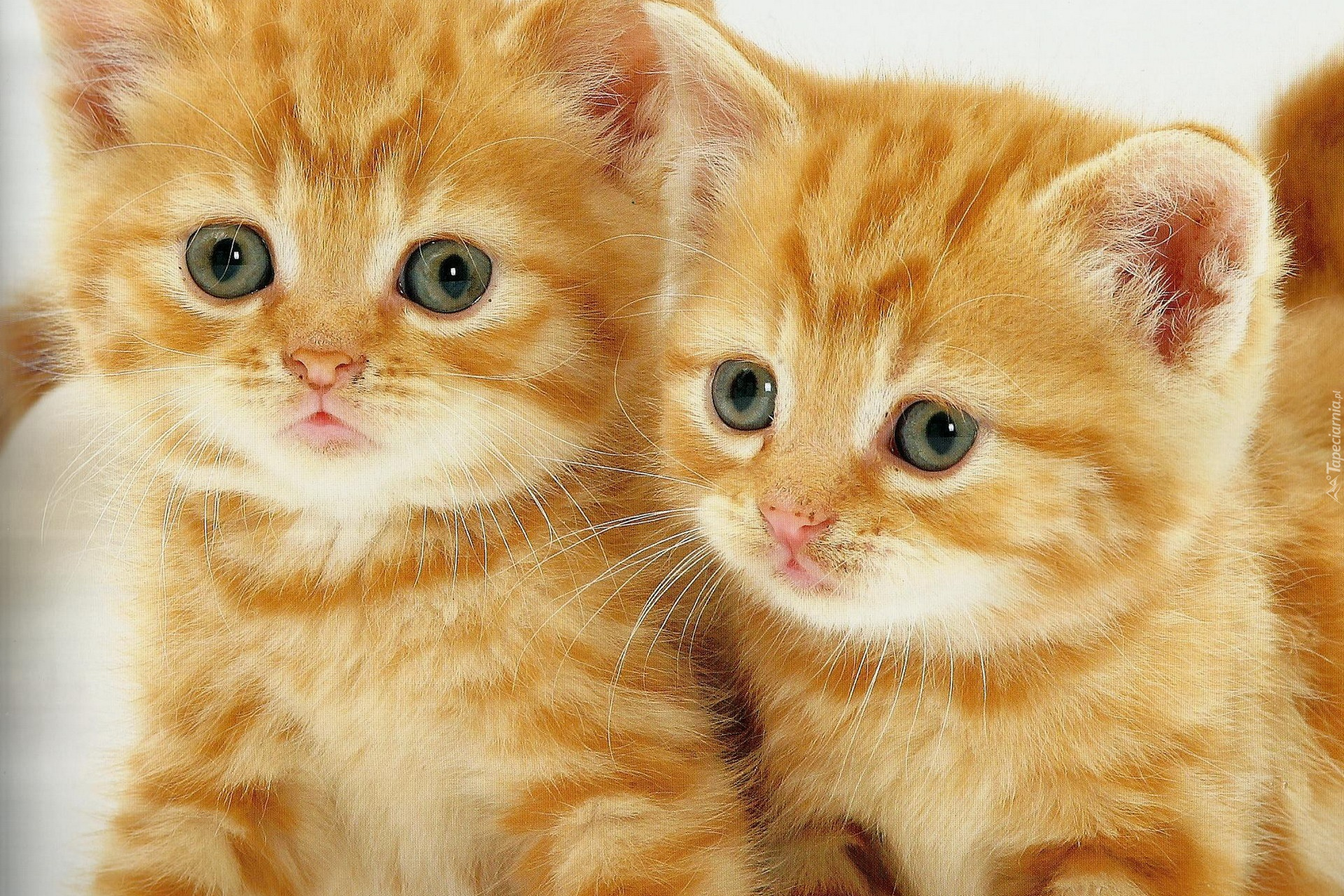 Top  Cutest Cats In The World