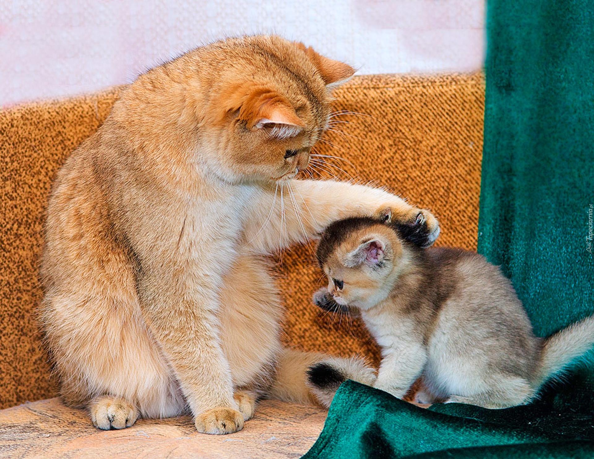 Kocica, Mały, Kotek